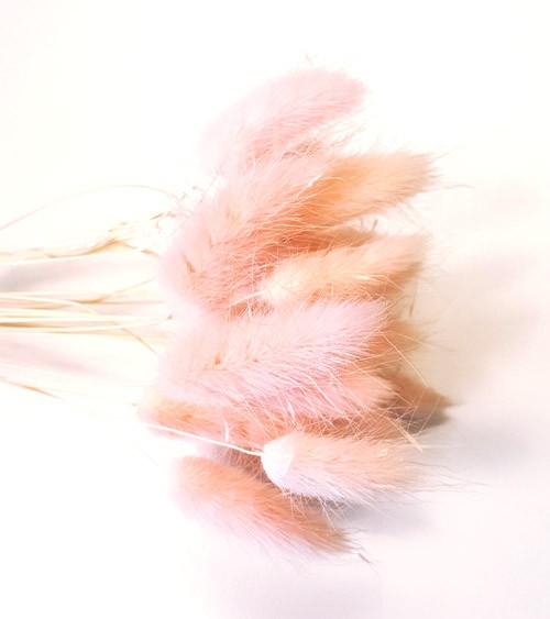 Samtgras getrocknet - rosa - ca. 55 cm - 20 Stück