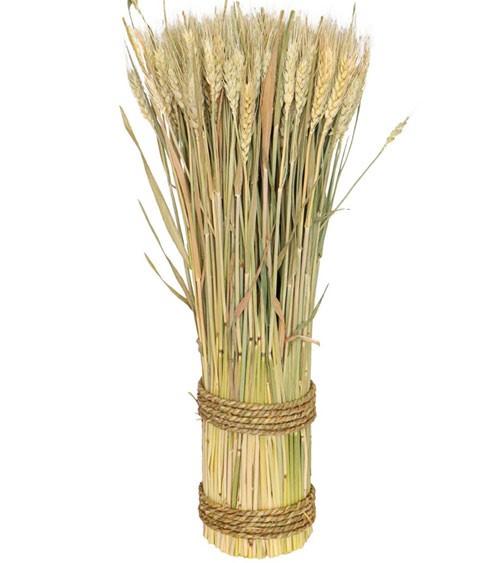 Natürliches Weizenähre-Bündel - 10 x 50 cm