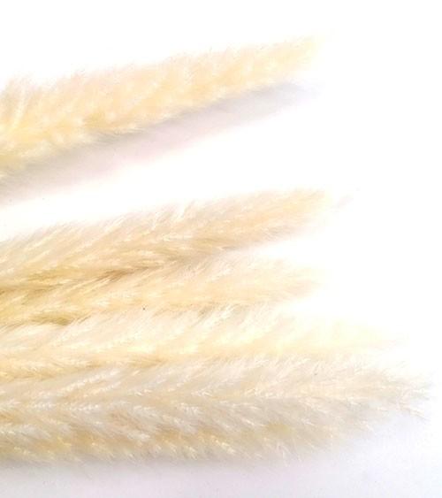 Pampasgras - gebleicht - 73 cm - 6 Stück
