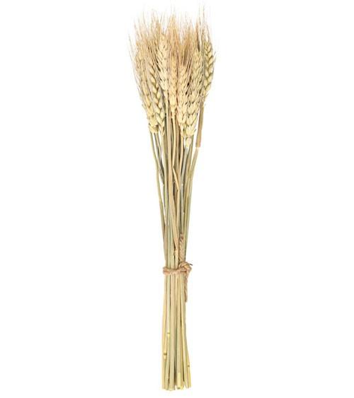 Getrocknete Weizenähren - 24 Stück - 35 cm