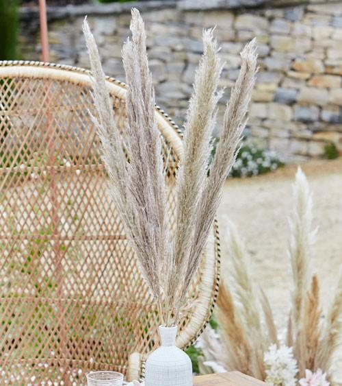 Pampasgras getrocknet - naturbraun - ca. 90 cm - 5 Stück