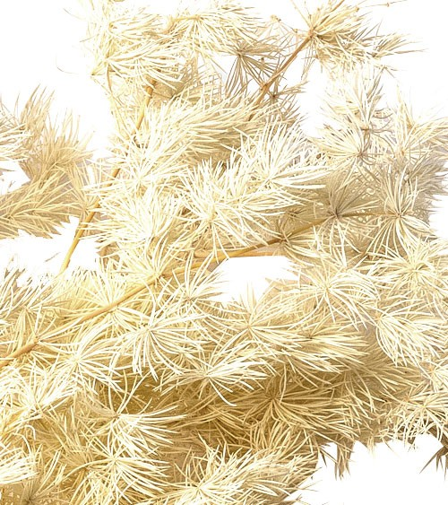 Getrocknetes Ziergras - natur - 42 - 50 cm