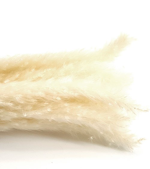 Pampasgras - weiß - 75 cm - 6 Stück