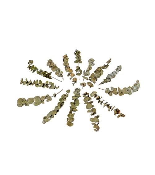 Getrocknete Eukalyptuszweige - 85 g