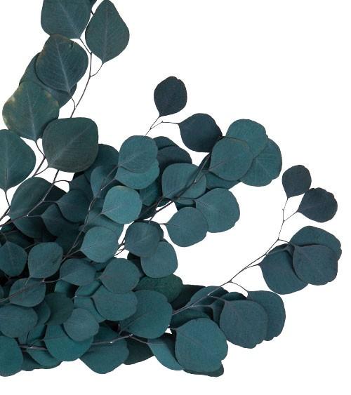 Getrocknete Eukalyptuszweige - 50-70 cm